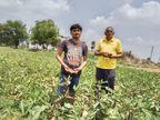 વિરપુર ખાતે યુવાન ખેડૂતનો લાલ ભીંડાની ઓર્ગેનિક ખેતીનો નવતર અભિગમ અન્ય ખેડૂતો માટે પ્રેરણારૂપ વીરપુર,Virpur - Divya Bhaskar