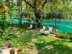 યુવકે ઘરને વન્ડર લેન્ડ બનાવ્યું,વૃક્ષો અને ફૂલ - છોડ ઉછેરીને વાતાવરણને શુદ્ધ કર્યું|ભરૂચ,Bharuch - Divya Bhaskar