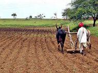 इस साल समय से खरीफ फसल की कटाई से नवंबर में रबी फसलों की बुआई 348 हेक्टेयर तक पहुंची इकोनॉमी,Economy - Dainik Bhaskar