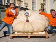 जर्मनी के मैथियास ने छोटी कार के आकार का कद्दू उगाकर बनाया वर्ल्ड रिकॉर्ड, 1,190.49 किलो था इसका वजन|लाइफस्टाइल,Lifestyle - Dainik Bhaskar