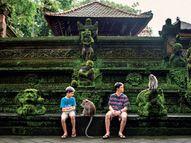 बाली में मंदिर के बंदर खाने की अच्छी चीज के लिए सौदा करते हैं, कीमती सामान पर पहले हाथ साफ करते हैं|द इकोनॉमिस्ट,The Economist - Dainik Bhaskar