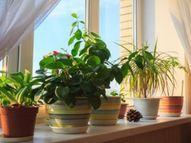 घर में हरियाली के लिए बालकनी गार्डनिंग का रहेगा ट्रेंड, हाउस होल्ड प्लांट्स की साल भर रहेगी डिमांड|लाइफस्टाइल,Lifestyle - Dainik Bhaskar