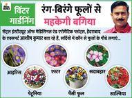 सर्दियों में आपकी बगिया में चार चांद लगाएंगे ये रंग-बिरंगे फूलों वाले पौधे, जानिए इन्हें लगाने और देखभाल का तरीका|लाइफ & साइंस,Happy Life - Dainik Bhaskar