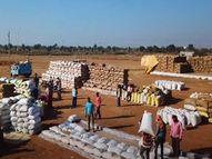 सरकार ने खरीदा 84.44 लाख मीट्रिक टन धान, 20 वर्षो में इतनी खरीदी कभी नहीं हुई थी|छत्तीसगढ़,Chhattisgarh - Dainik Bhaskar