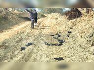 विभागों ने सैंपल ही गलत लिए, जांच में सभी फेल, अब दुबारा नमूने भेजेंगे- फिर पता चलेगा कैसे मर रहे पक्षी|श्रीगंंगानगर,Sriganganagar - Dainik Bhaskar