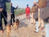 एनआरआई की कोठी से ढाई लाख का सामान चोरी, चोरों ने जमीन से जुड़े कई दस्तावेज फाड़े पंजाब,Punjab - Dainik Bhaskar