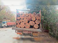 तमाड़ और बाेकाराे के लकड़ी तस्कर ट्रक से टेबाे ले जा रहे थे नाै लाख के साल के 62 बाेटे, ट्रक समेत तीन लोग धराए|चक्रधरपुर,Chakradharpur - Dainik Bhaskar
