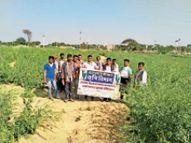 कृषि विज्ञान केंद्र में फसलों में रोग और उनके उपचार की दी जानकारी|बाड़मेर,Barmer - Dainik Bhaskar