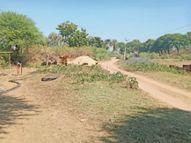 सीमा सुरक्षा के लिए भड़ेरु रेलवे फाटक से महागौर तक बाउंड्रीवाॅल इसी माह बनेगी गंजबासौदा,Ganjbasoda - Dainik Bhaskar