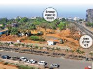 आम, बरगद और नीम जैसे पेड़ काटकर बुलेवर्ड स्ट्रीट पर दो करोड़ खर्च करके लगा रहे पाम ट्री|भोपाल,Bhopal - Dainik Bhaskar
