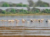 गिधवा व परसदा में 31 से पहला पक्षी महोत्सव दुर्ग,Durg - Dainik Bhaskar