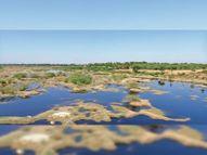 खूबसूरत तस्वीर का चिंताजनक सच, आरजिया के पास कोठारी नदी में भरा दूषित पानी|भीलवाड़ा,Bhilwara - Dainik Bhaskar