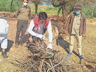 जिले में एक दिन में पहली बार 49 पक्षी मृत मिले, कुल मरे पक्षियों की संख्या 218 हुई|सवाई माधोपुर,Sawai Madhopur - Dainik Bhaskar