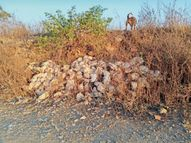 तापमान बढ़ने से राहत, 2 दिन से जिले में एक भी पक्षी के मरने की सूचना नहीं|मंदसौर,Mandsaur - Dainik Bhaskar