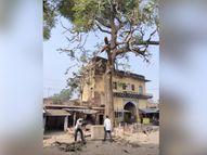 वकीलों ने अपनी सुविधा के लिए कटवा दिया 70 साल पुराना आड़ू का पेड़|भरतपुर,Bharatpur - Dainik Bhaskar