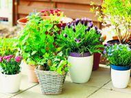 पत्तियां बताती हैं पौधों की सेहत का हाल, इन सुझावों से पूरी करें पौधों की ज़रूरते|मधुरिमा,Madhurima - Dainik Bhaskar