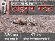 पेंच नेशनल पार्क में शिकारी एक बाघ के चारों पंजे काट ले गए, खाल भी उतारी; सिवनी में दूसरे बाघ की मौत का कारण स्पष्ट नहीं|छिंदवाड़ा,Chhindwara - Dainik Bhaskar