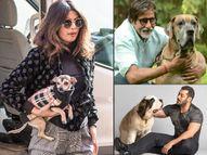अमिताभ बच्चन से लेकर सलमान खान तक, महंगे पालतू जानवरों के मालिक हैं ये बॉलीवुड सेलेब्स|बॉलीवुड,Bollywood - Dainik Bhaskar