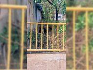 बिजली कंपनी ने पेड़ की डाली काटकर नाले में फेंकी होशंगाबाद,Hoshangabad - Dainik Bhaskar