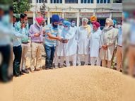 मानसा जिले की अनाज मंडियों में हुई 19417 मीट्रिक टन गेहूं की खरीद|बठिंडा,Bathinda - Dainik Bhaskar