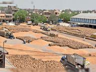किसानों को फसल बेचने को करना होगा वेट, हैफेड ने 35615 क्विंटल गेहूं खरीदा|हिसार,Hisar - Dainik Bhaskar