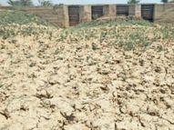 2.47 करोड़ से बने डैम में एक बूंद भी पानी नहीं रुका, लोग बोले- ट्यूबवेल से ढोकर ला रहे पानी|ग्वालियर,Gwalior - Dainik Bhaskar