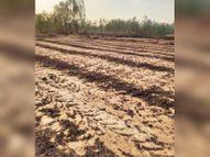 संगरानी में आग से 20 एकड़ व उगाला में 5 एकड़ फसल जली अम्बाला,Ambala - Dainik Bhaskar