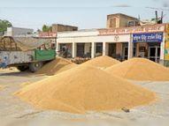 नई धानमंडी में बुधवार को 25 हजार क्विंटल गेहूं की हुई खरीद, मंडियाें में गेहूं की आवक बढ़ी, खरीद ने पकड़ी रफ्तार|श्रीगंंगानगर,Sriganganagar - Dainik Bhaskar