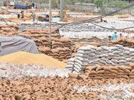 ई-खरीद पोर्टल में एरर, कैंट मंडी में 91,418 क्विंटल गेहूं की खरीद, 53,333 क्विंटल गेहूं का उठान लटका अम्बाला,Ambala - Dainik Bhaskar