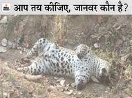 एक के चारों पंजे काटकर ले गए, जानवरों के अंगों की तस्करी करने वाले रैकेट पर शक|रायपुर,Raipur - Dainik Bhaskar