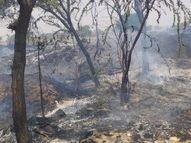 नीमराणा के प्रताप सिंहपुरा गांव में सूखे ईंधन में लगी आग, 15 से ज्यादा हरे पेड़ जले|अलवर,Alwar - Dainik Bhaskar