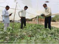 रावलीनाडी में किचन गार्डन पर प्रक्षेत्र भ्रमण का आयोजन; डॉ. पगारिया ने कहा- संतुलित आहार से मिटेगा कुपोषण|बाड़मेर,Barmer - Dainik Bhaskar