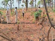 टास्क फोर्स को खामला के जंगल में दिखा बड़ा नुकसान, प्रशिक्षु रेंजर को हटाया खंडवा,Khandwa - Dainik Bhaskar