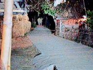 मुलाबारी में फिर घुसे हाथी, मक्के की फसल बर्बाद, एक घंटे अफरा-तफरी|दिघलबैंक,Dighalbank - Dainik Bhaskar