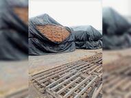 खराब मौसम के बीच हैफेड ने फटी पुरानी तिरपाल से ढकी गेहूं की बाेरियां|अम्बाला,Ambala - Dainik Bhaskar
