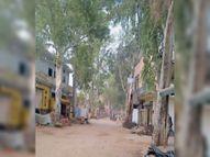 करधान रोड अब 24 फुट तक चौड़ी हाेगी, वन विभाग ने शुरू किया पेड़ कटाई का काम|अम्बाला,Ambala - Dainik Bhaskar