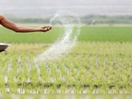 DAP खाद के रेट में 58% का इजाफा, 1200 रुपए में मिलने वाली बोरी के लिए अब अन्नदाताओं को चुकाने होंगे 1900 रु.|बिजनेस,Business - Money Bhaskar