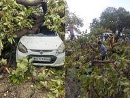 तूफान से आधा सैकड़ा पेड़ धराशायी, मुख्य मार्ग पर गिरने से यातायात अवरुद्ध, कई जगहों पर नुकसान|सतना,Satna - Money Bhaskar