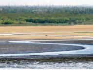 पिछले साल से 1.60 फीट कम है बड़े तालाब का लेवल, जून अंत में 2 फीट और हो सकता है कम|भोपाल,Bhopal - Money Bhaskar