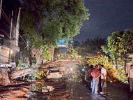 तेज आंधी में कार पर गिरा पेड़ टूटी टहनियां, तेज बारिश भी हुई; 37 डिग्री दर्ज किया गया अधिकतम तापमान|बिलासपुर,Bilaspur - Money Bhaskar