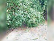 पांच दिनों से सोबरौली-अवारी मुख्य पथ ब्लाॅक, लाेग परेशान|मधुबनी,Madhubani - Dainik Bhaskar