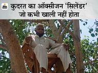 पीपल के पेड़ के साथ प्राणवायु की जुगलबंदी, 67 साल की उम्र फिर भी जोश कम नहीं मध्य प्रदेश,Madhya Pradesh - Dainik Bhaskar