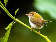 प्रकृति के क़रीब ले आया लॉकडाउन, हमें भी नहीं पता था कि हमारे आसपास इतने सुंदर पक्षी मौजूद हैं|अहा जिंदगी,Aha Zindagi - Dainik Bhaskar