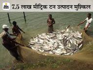 बिहार की हैचरीज में ऑक्सीजन नहीं, 2250 करोड़ मछलियों की जान को खतरा; मछुआरों को भी रोज 20 करोड़ का घाटा|पटना,Patna - Dainik Bhaskar