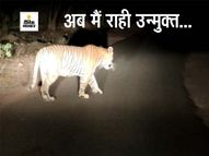 जंगल से निकल सड़क पर चहल-कदमी, न शिकारियों का डर न वाहनों का, मूक प्राणी भी समझ गया है कि मनुष्य अभी कोरोना से भयभीत है|राजस्थान,Rajasthan - Dainik Bhaskar