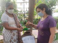 महिलाओं ने बनाया बीज बैंक, करोंद में युवक की कोशिशों से फिर जी उठा गुलमोहर का पेड़|भोपाल,Bhopal - Dainik Bhaskar