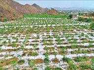 6 राज्यों ने 7,605 Cr खर्च कर 136 करोड़ पौधे लगाए; महाराष्ट्र, छत्तीसगढ़, बिहार और झारखंड में हरियाली बढ़ी तो राजस्थान-मप्र में स्तर घटा देश,National - Dainik Bhaskar