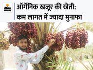 गुजरात के किसान ने बंजर जमीन पर 10 साल पहले ऑर्गेनिक खजूर लगाए, अब हर साल 35 लाख रुपए की कमाई DB ओरिजिनल,DB Original - Money Bhaskar