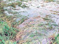 सामान्य से 23 फीसदी अधिक बारिश; आज और कल भारी बरसात की चेतावनी भी, फसल खराब होने का डर बिलासपुर,Bilaspur - Money Bhaskar