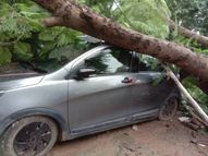 रीवा के त्योंथर सिविल अस्पताल परिसर में खड़ी कार पर गिरा पेड़, कोई जनहानि नहीं, कुछ समय के लिए मची अफरा-तफरी|रीवा,Rewa - Money Bhaskar